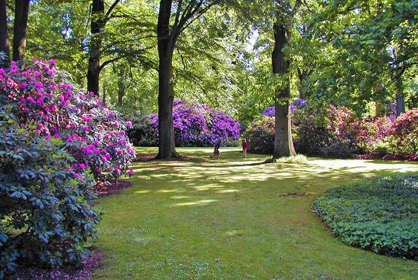 rhododendron wald stiftung bremer rhododendronpark. Black Bedroom Furniture Sets. Home Design Ideas